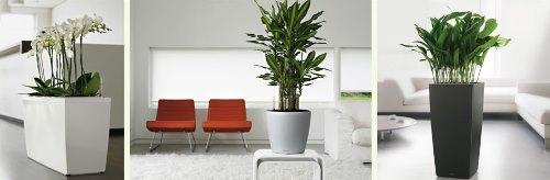Dekorasi Rumah Ramah Lingkungan