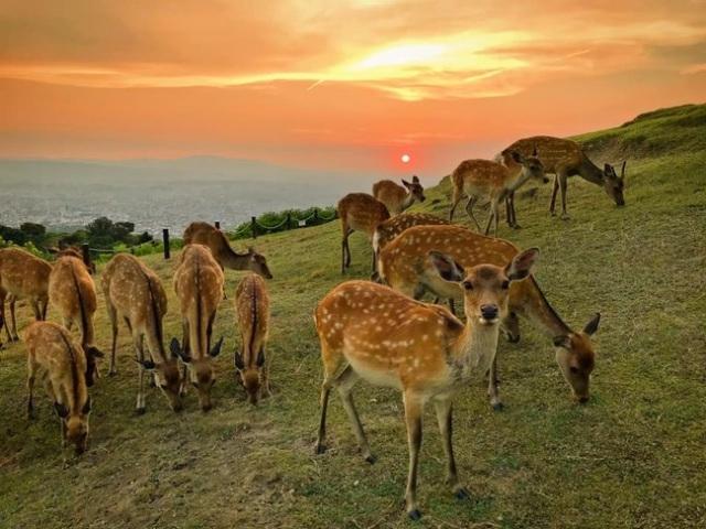 6 Tempat Zekkei Paling Keren di Jepang: Ada yang Sampai Dirahasiakan