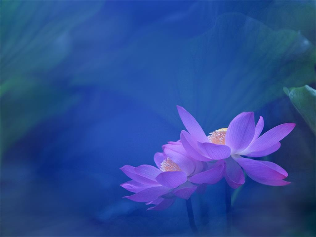 PPT background of elegant lotus flower