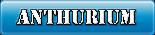 Coroana Anthurium