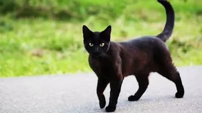 Kenapa Kucing Hitam Simbol Horor dan Magis
