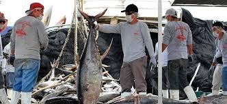 Se levanta venta de atún en México, Conapesca ¡
