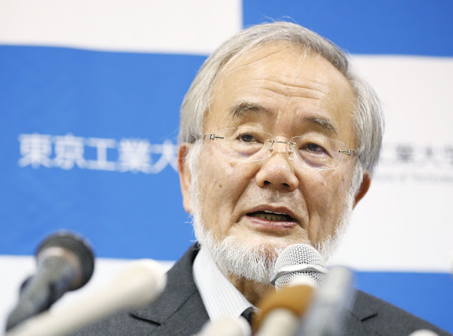 Yoshinori Ohsumi  Wins Nobel Prize for the Study of 'Self-Eating' Cells