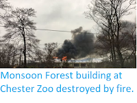 https://sciencythoughts.blogspot.com/2018/12/monsoon-forest-building-at-chester-zoo.html