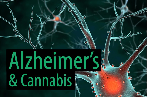 Marijuana Can Promote Removal Of Toxic Protein Associated With Alzheimer's Disease