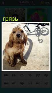 на земле стоит собака грязная и на велосипеде едят 667 слов