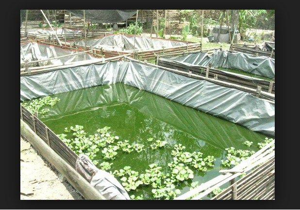Kolam Ikan Nila Deri Terpal, Contoh Kolam Ikan Nila