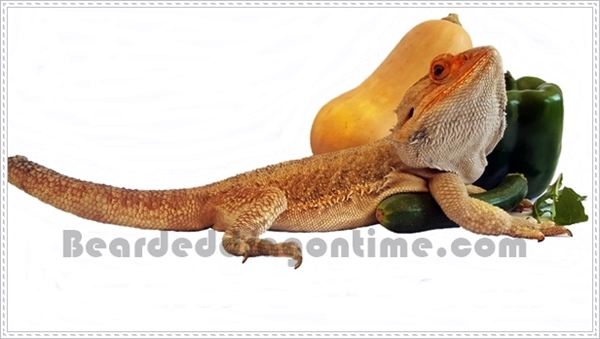 what do bearded dragons eat?
