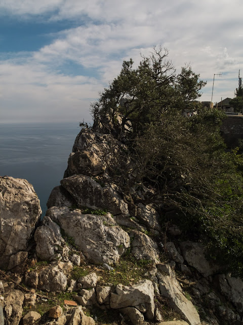 Gibraltar's rocky landscape and sea in the background.