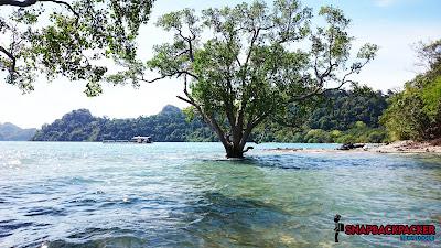 Pokok Dalam Air Laut
