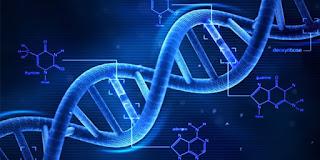 Apa Yang Dimaksud Dengan Genetik