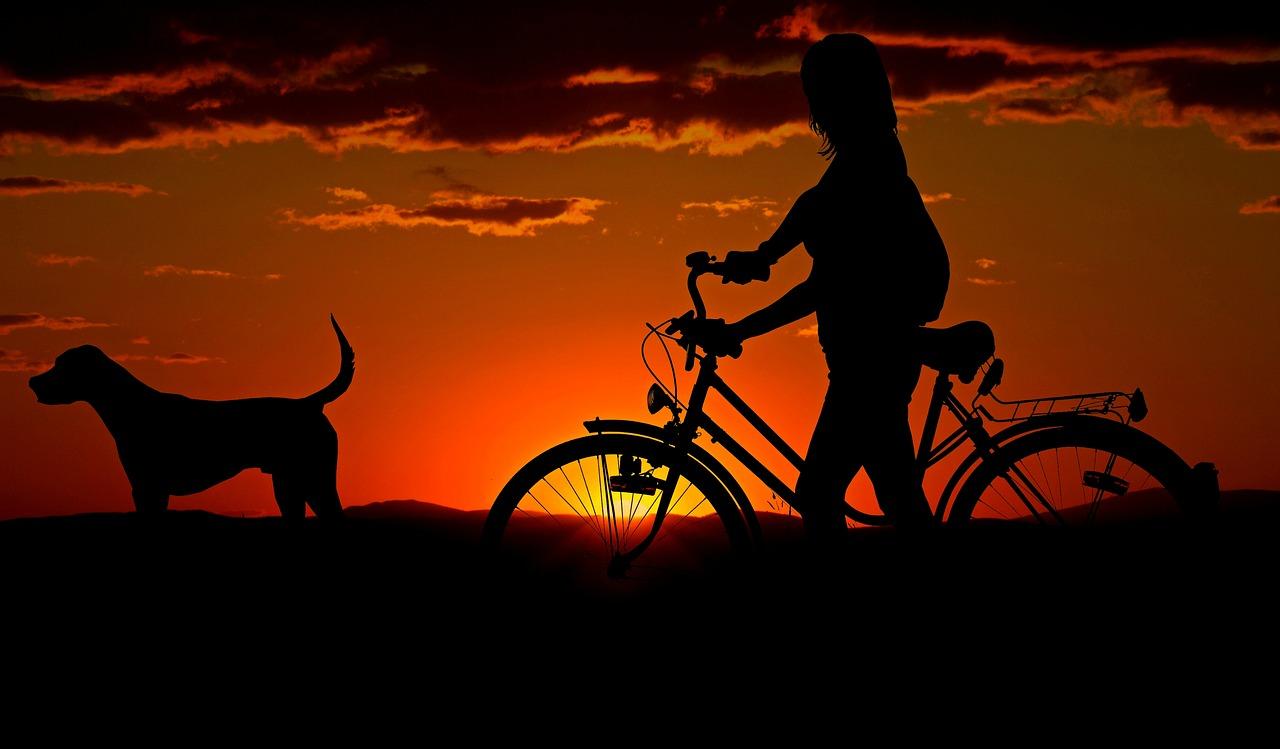 Quel est le chien idéal pour votre style de vie?