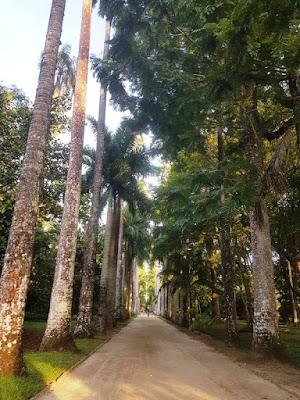 Avenue lined by tall palm trees
