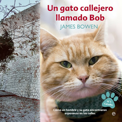 gato-callejero-llamado-bob