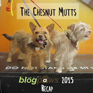 The Chesnut Mutts BlogPaws 2015 Recap