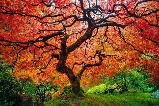 autumn-colors-2