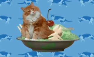 Elmo's World Cats Quiz