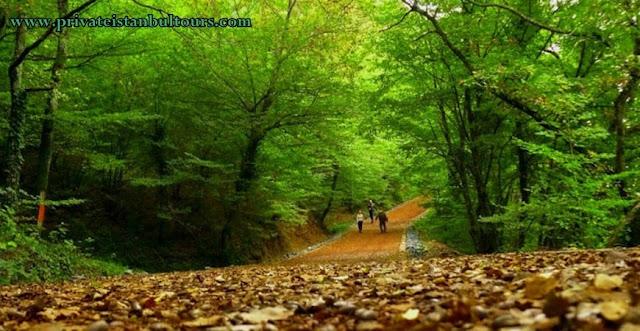 غابة بلغراد