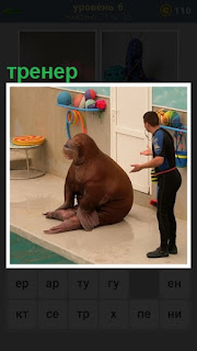 Тренер занимается с тюленем, который сидит перед ним