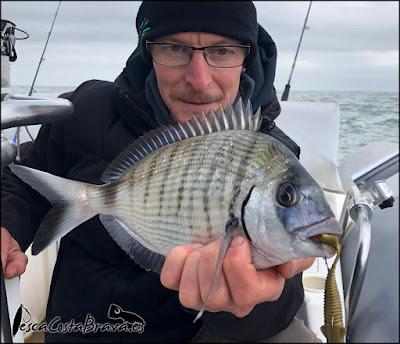 sargo sakura gobygo pesca costa brava jjpescasport 2 - TRAS EL TEMPORAL... SARGOS!