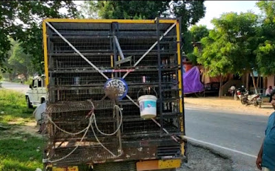 Bird Seller Looted By Unknown People As Called For Purchasing Birds