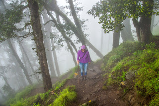 Trekking through green forests in the morning mist a heavenly experience during Srikhand Mahadev yatra