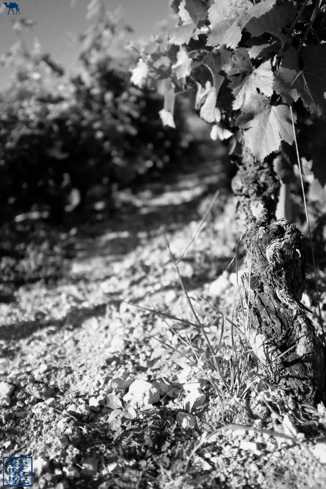 Le Chameau Bleu - Cep de Vigne de Santenay