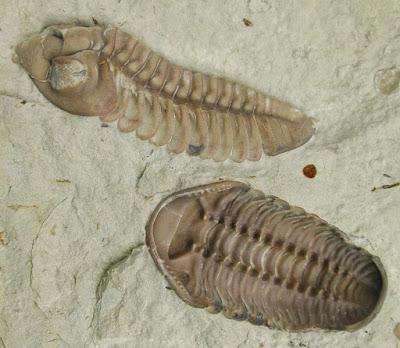 contoh fosil