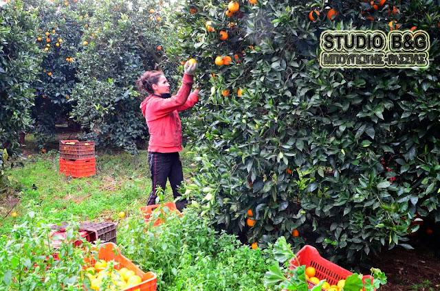 Εταιρία εξαγωγής αγροτικών προϊόντων αναζητά εργάτες