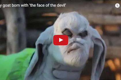 VIDEO: Aneh, Kepala Anak Kambing Ini Terlahir Seperti Ini