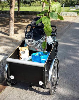 Christiania Bikes, Lastenrad, Shiba Inu, Hund