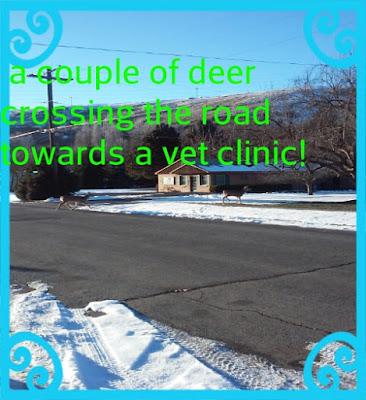 Deers Visit A Vet Clinic