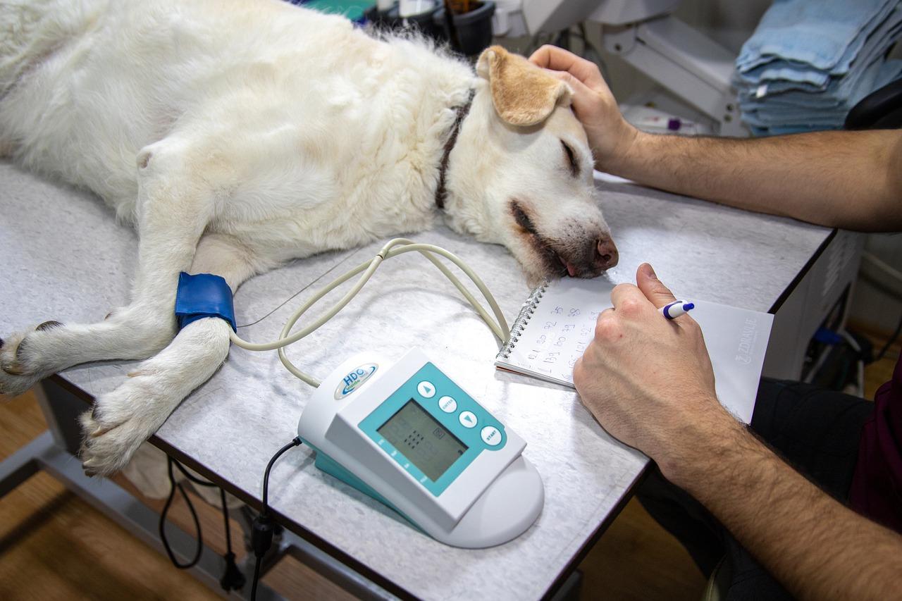 Qu'est-ce que le parvovirus canin? Détection et traitement