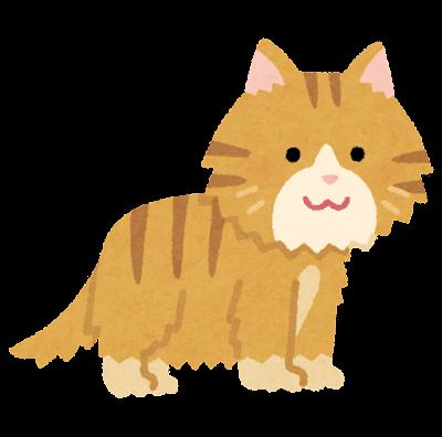 長毛の猫のイラスト
