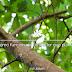 Ecosia.-como-funciona-el-buscador-que-planta-a%25cc%2581rboles-2