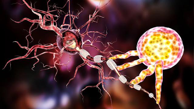 Perbedaan Antara Neuron dan Neuroglia
