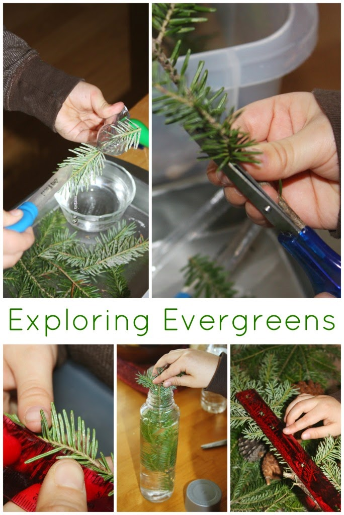 http://littlebinsforlittlehands.com/evergreen-science-preschool-examination-observation-experiment/