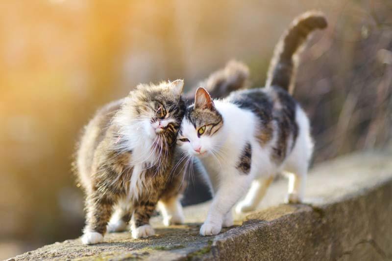 Do Cats Feel Love?