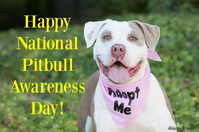 National Pit Bull Awareness Day Wishes Unique Image