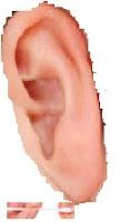 Comment prendre soin des oreilles