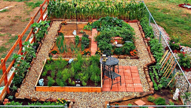 Vegetable garden in backyard