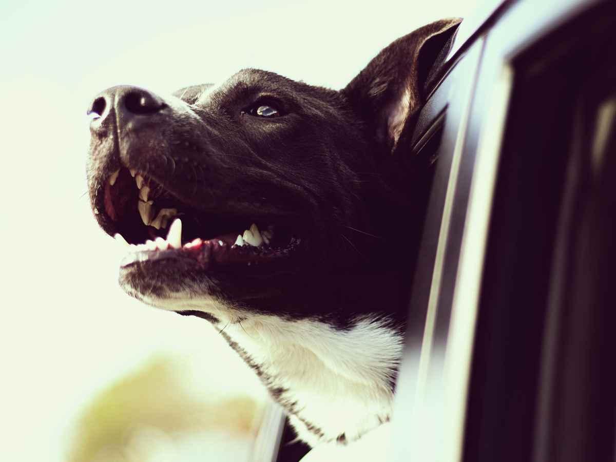 Список потенциально опасных собак