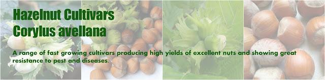 http://www.balkep.org/hazelnut-cultivars.html