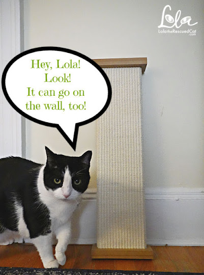 Black and White Cat with Bootsie's Combination Scratcher