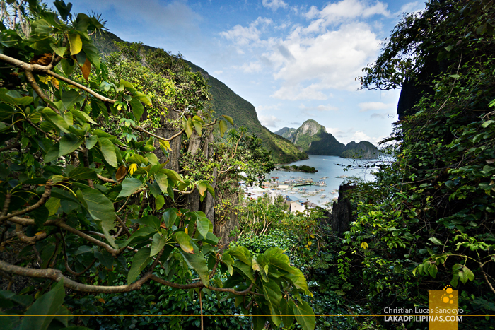 El Nido Canopy Walk View