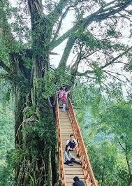 Harga Tiket Masuk Rumah Pohon Dan Jembatan Kayu Gantung Curug