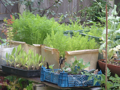 Photo of a collection of plastic containers filled with vegetable plants