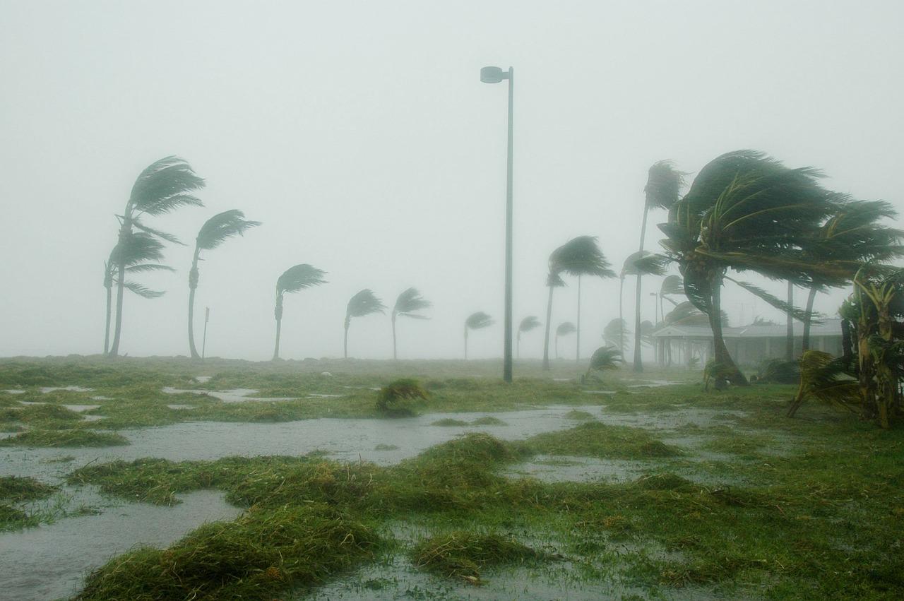hurricane-palm-trees