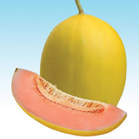 melon kinanti, melon kuning, manfaat buah melon, cara menanam melon, jual benih melon hibrida, toko pertanian, toko online, lmga agro
