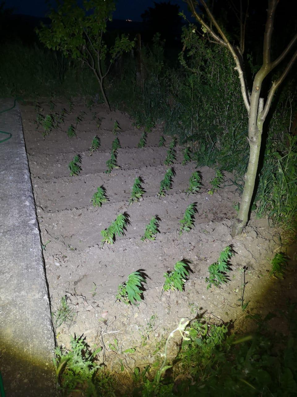 Έστησαν καλλιέργεια κάνναβης σε ειδικά διαμορφωμένο χώρο